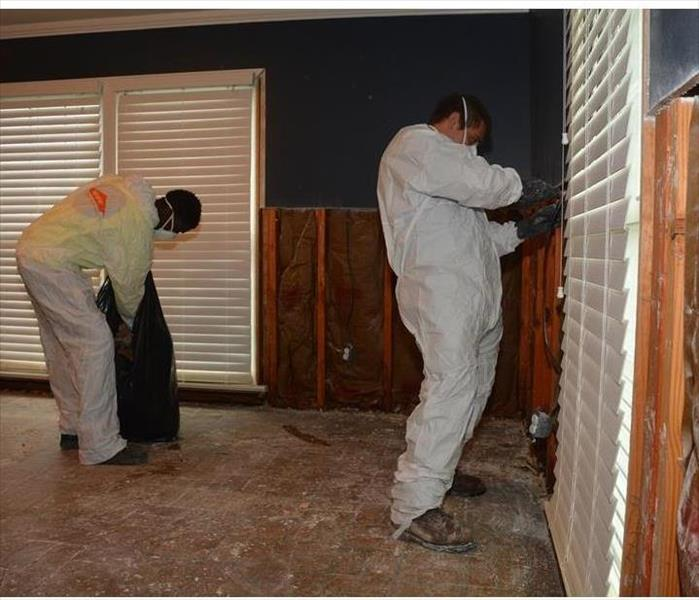 Mold Remediation in Berry Hill
