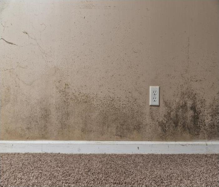 Mold Remediation The Risks Of Mold Growth In Your Nashville Residence